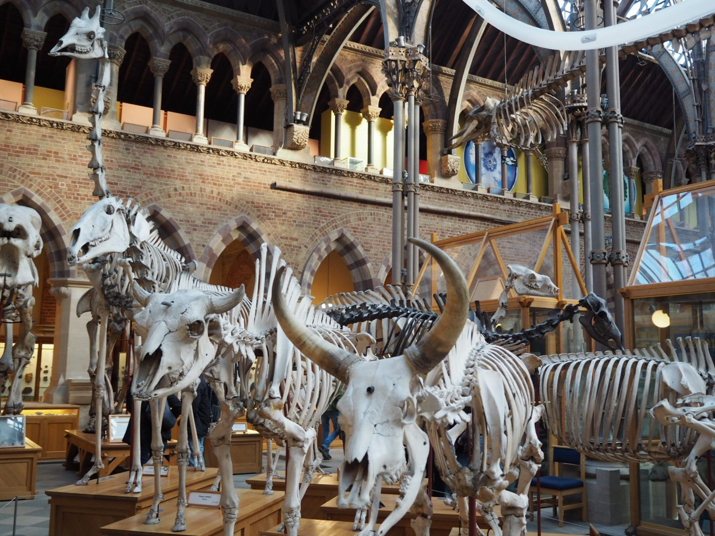 Oxford day trip - Oxford Natural History Museum